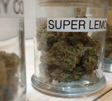 Mercado Regulado de Cannabis